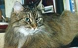 """Теперь хозяйки узнают, что кошки хотят совсем не """"Вискас"""""""