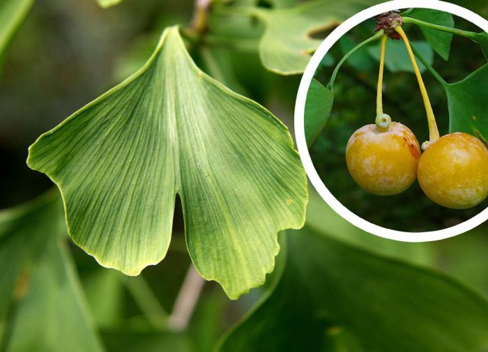 Суд присяжных признал московских скинхедов виновными в убийствах