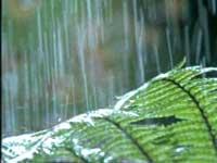 Дожди в Амазонии буквально размыли 17 городов