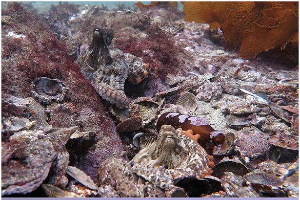 У берегов Австралии обнаружили Октлантиду. 376162.jpeg