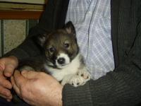 В Челябинске родился пятилапый щенок