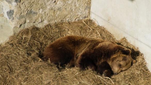 Животные Московского зоопарка готовятся к спячке. 394165.jpeg