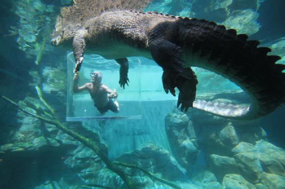 Отец спас сына от крокодила, укусив хищника за лапу. 398165.jpeg