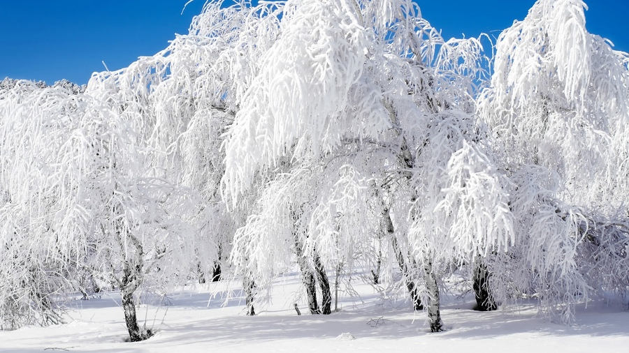 Зимы в ближайшую пятилетку будут снежными и холодными. Зимы в ближайшую пятилетку будут снежными и холодными