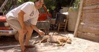 Собака спасла хозяина, приняв удар током на себя
