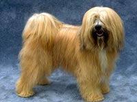 Китайская миллионерша выложила 400 тыс. евро за редкую собаку