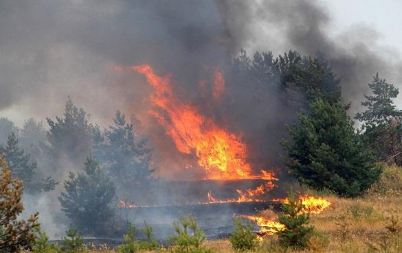 Площадь сибирских лесов, объятых пожарами, за сутки выросла в се