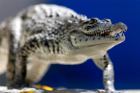 Мэр мексиканского города женился на крокодиле второй раз. ВИДЕО. 323172.jpeg