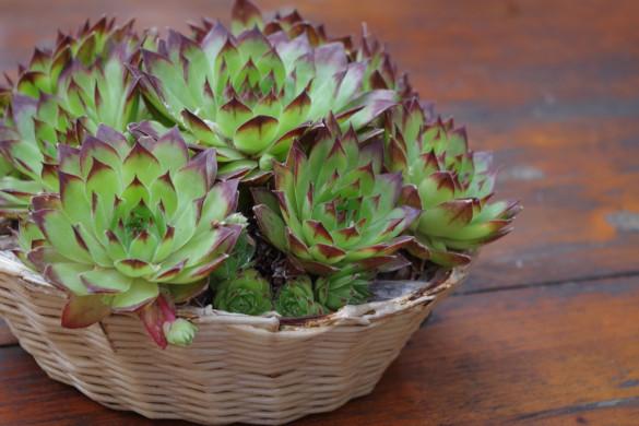 Удобрения для комнатных растений: когда, зачем, как и какие