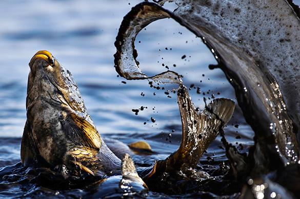 Всемирный фонд дикой природы открестился от российского финансирования. Всемирный фонд дикой природы открестился от российского финансир