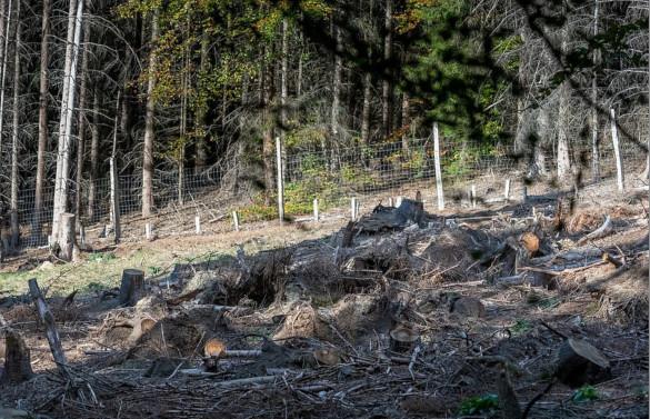В интернете появилось загадочное фото оленя. 394177.jpeg
