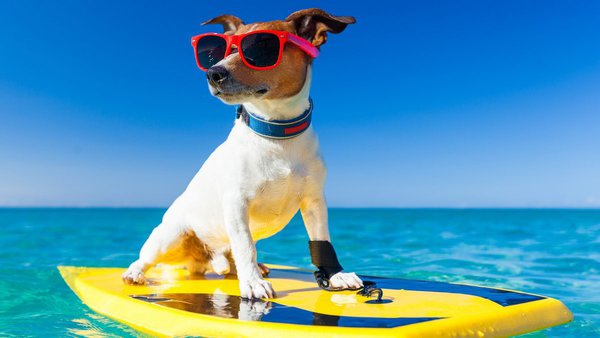 Собака на каникулах. Собака на отдыхе