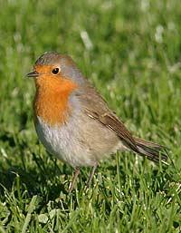 Что ведет птиц на юг? Раскрыт секрет биологического компаса