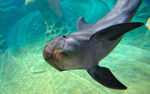 Ученые нашли сходства в социальных взаимодействиях у людей и дельфинов. 319184.jpeg