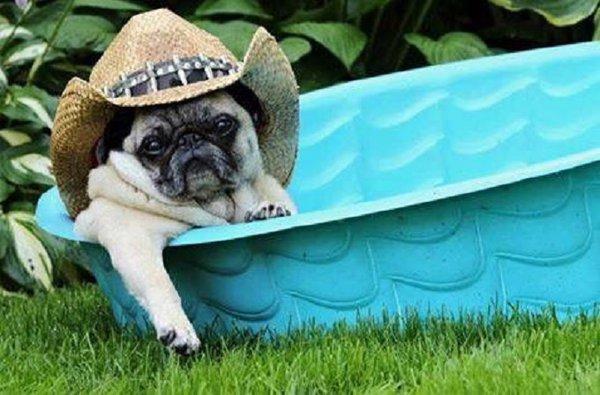 Собака на каникулах. Гостиницы для животных