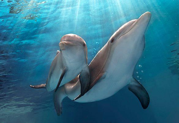 Ученые нашли сходства в социальных взаимодействиях у людей и дельфинов. 319185.jpeg