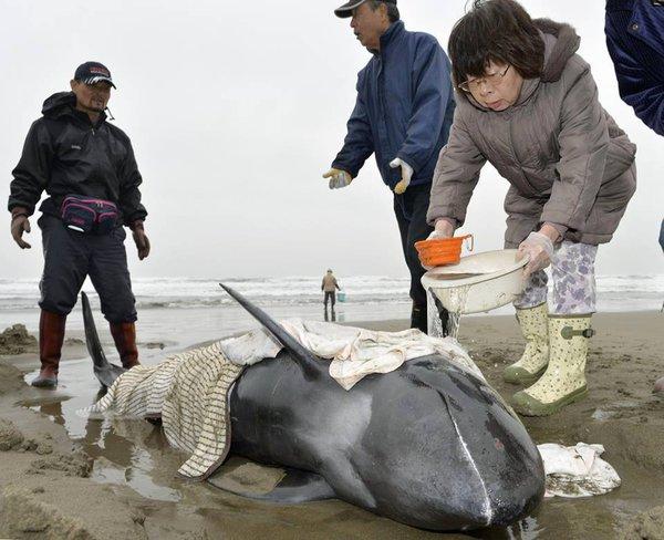 Ученые нашли сходства в социальных взаимодействиях у людей и дельфинов. 319186.jpeg