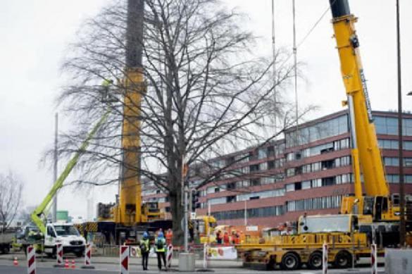 В Швейцарии пересадили старый клен, мешавший строительству новой дороги. В Швейцарии пересадили старый клен, мешавший строительству новой