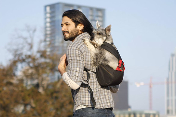 Туристам придумали рюкзак для собак