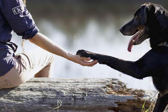 Кинологов обвинили в неправильном определении всех пород собак. 391187.jpeg