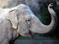 слониха. 260188.jpeg