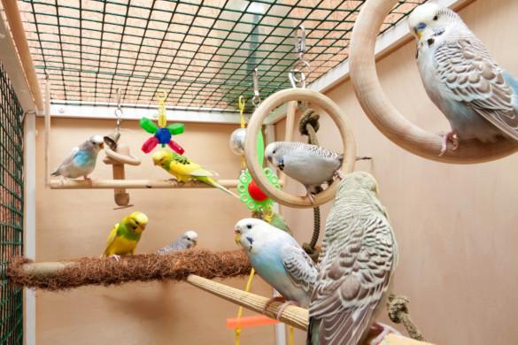 Десять вещей, которые нужно знать, прежде чем заводить птицу (часть 2). 394188.jpeg