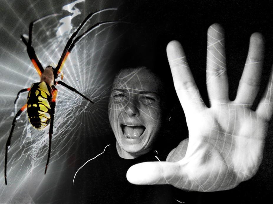 Арахнофобия: почему мы боимся пауков. Боязнь пауков