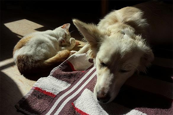 С владельцев домашних животных будут собирать плату. 377191.jpeg