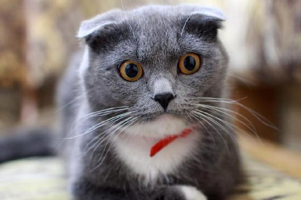 Московский стрип-клуб засудят за отказ коту в приватном танце. 381191.jpeg