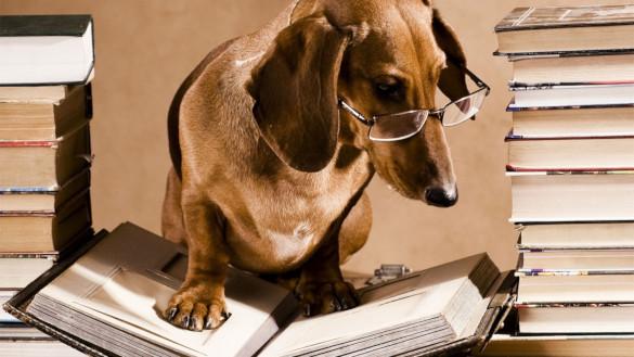 Образ собаки в русской литературе. 394192.jpeg