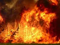 На Дальнем Востоке огнем уничтожено более 2,5 гектаров леса