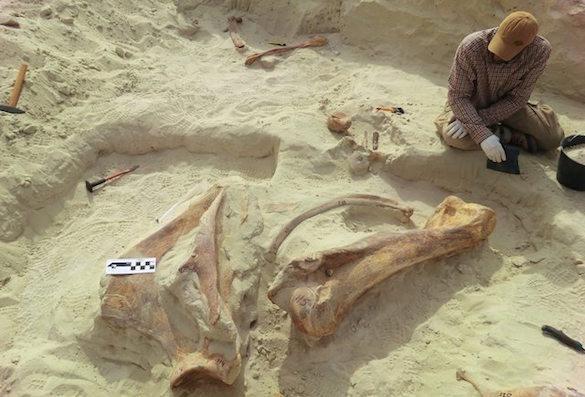На Аравийской полуострове нашли останки древнего гигантского слона. 375193.jpeg