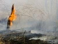 В Хабаровском крае растет число лесных пожаров