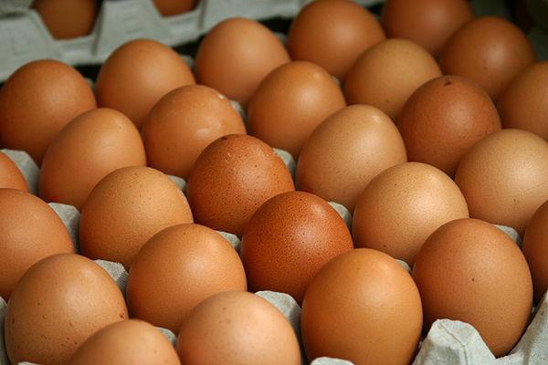 Россия ограничила ввоз птицы и яиц из Германии. 307202.jpeg
