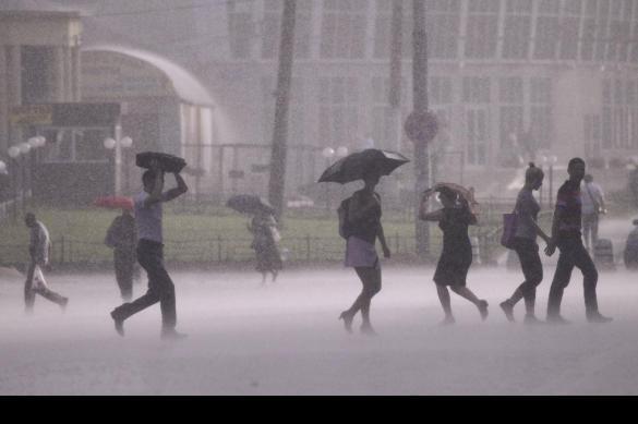 В Москве упавшее от порыва ветра дерево покалечило трех прохожих. В Москве упавшее от порыва ветра дерево покалечило трех прохожих