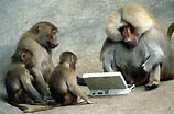 Низкоквалифицированных программистов сменят бабуины и шимпанзе