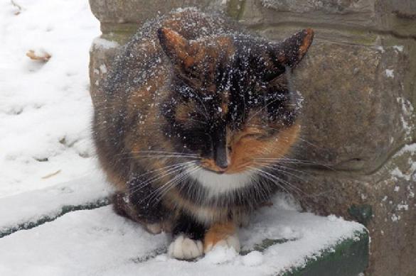 Почему линяет кошка. 396206.jpeg