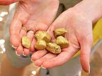 Ростовская область таит в себе 300 тонн золота