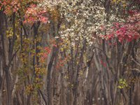 Нетронутая природа AHAE на фотовыставке в Галереях