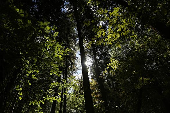 Семилетний мальчик выжил в лесах под Курском