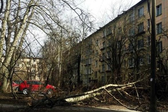 Трое детей пострадали от урагана в Москве. Трое детей пострадали от урагана в Москве