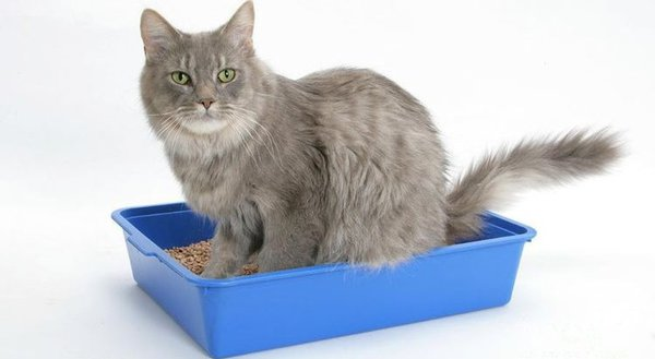 Чем заманить кошку на лоток. Кошка и лоток