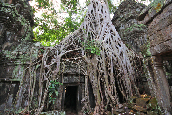 В джунглях около легендарного Ангкор-Вата найдены древние города