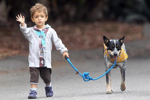 Домашние любимцы: кого подарить ребенку. 396211.jpeg
