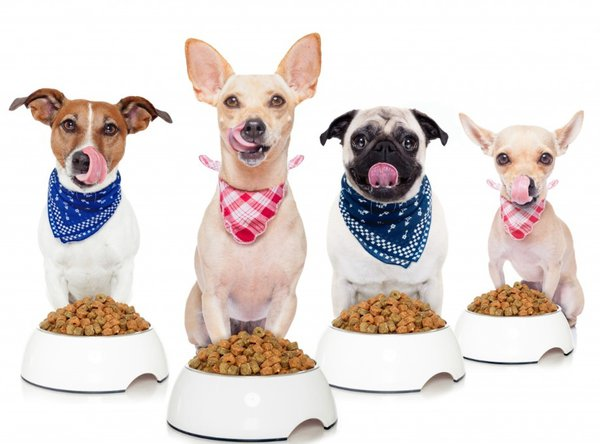 Чем кормить привередливых собак. Рацион собак