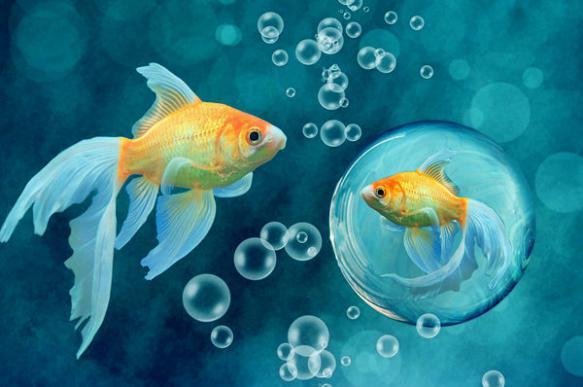 Золотая рыбка: виды аквариумных рыбок. 404214.jpeg