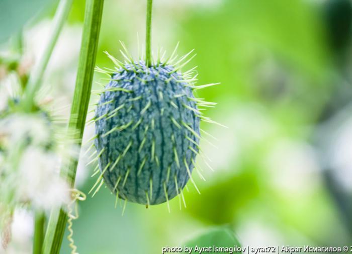 Судьба двух работников Саяно-Шушенской ГЭС до сих пор неизвестна