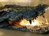 С фермы во Вьетнаме сбежали 60 крокодилов. 272219.jpeg