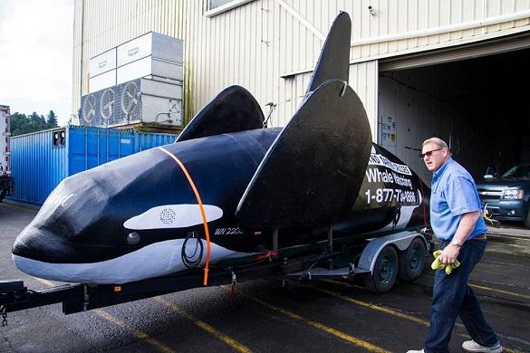 В Орегоне спущена на воду искусственная касатка. Фальшивая касатка распугает морских львов