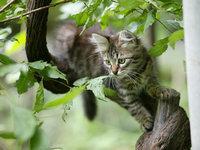 Домашний кот неделю сидел на дереве без воды и еды. 259221.jpeg